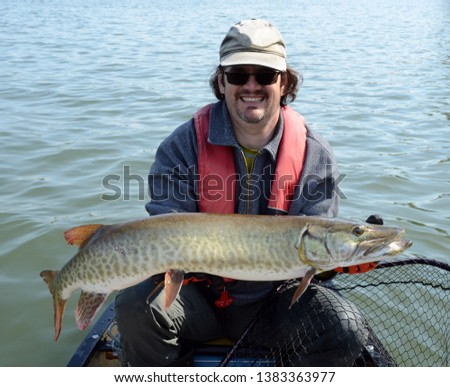 A medium sized barred green and bronze muskie fish being held by a man in a canoe in a gray shirt, baseball hats, and red PFD on a river on a sunny summer day #1383363977