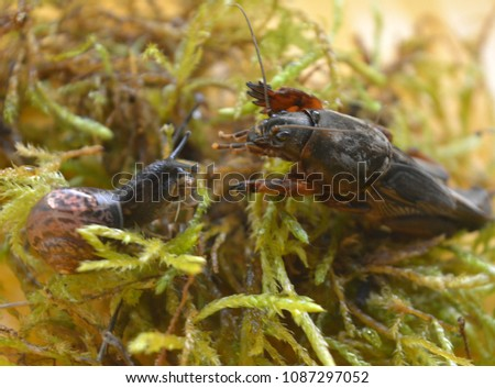Stock Photo a meeting of a mole cricket with a snail. wild nature. macro