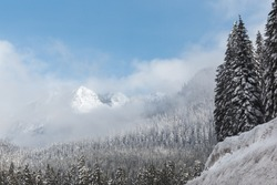 A mesmerizing shot of the thick forests covered with snow in Washington