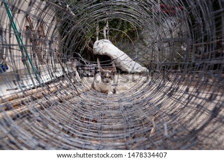 A metallic wired rolled making a tunnel  and in the end a kitty looking through watching for the dangers of pass through it. Vulnerable animals in danger concept.