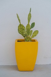 A mid-century modern yellow planter holding a cactus in Palm Springs.