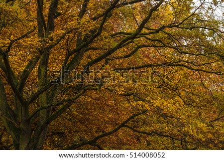 A mighty tree in autumnal coloration Stock foto ©