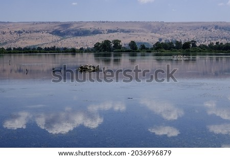 A minimalist view of Hula Lake as seen from the covered observation platform on the floating bridge, Hula Nature Reserve, Hula Valley, Upper Galilee, Northern Israel, Israel.