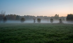 A misty autumnal morning on the outskirts of Kampinos National Park. Blurry silhouettes of the trees and bushes are barely visible due to thick fog which has started to disperse as the sun rises.