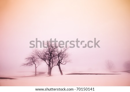 A misty dawn winter landscape with snow and tree