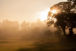 A misty morning on the golf course, as the sun rises from behind a tree.