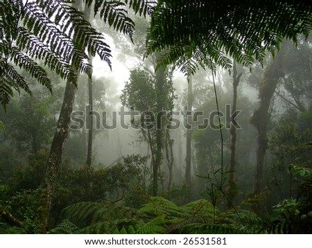 A misty rainforest in the middle of Borneo