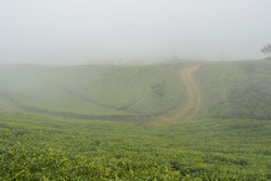 a misty tea estate view with road