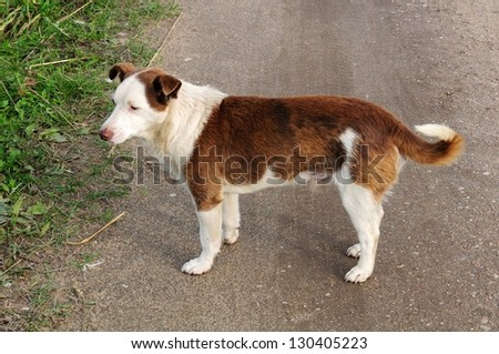 Brown And White Dog Brown And White...