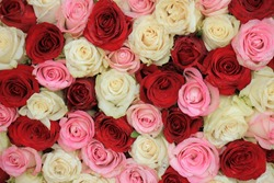 A mixed rose bouquet for a wedding