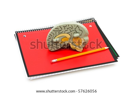 A model brain on a scribbler isolated on a white background, Studying healthcare