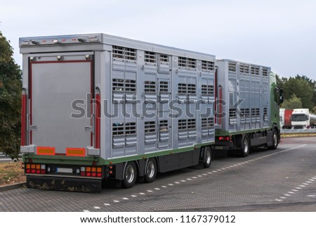 A modern cattle transporter with trailer on its way to the slaughterhouse #1167379012