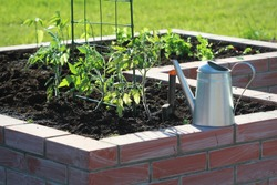A modern vegetable garden with raised briks beds with growing tomato .