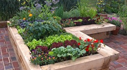 A modern well planned vegetable garden with raised beds and assorted vegetables