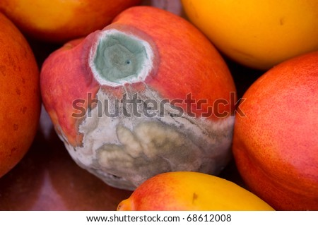A mold attacked peach surrounded by good ones.