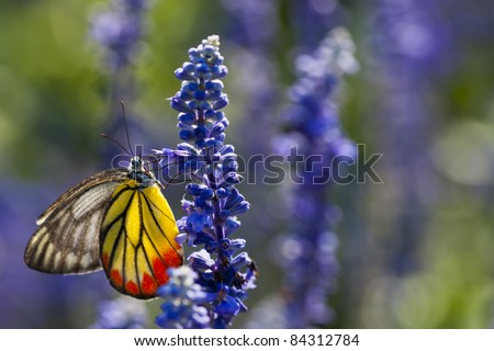 A Monarch Butterfly On Violet Flower Nature light