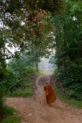 A monk walking through the forest in morning.