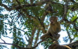 A monkey climbing on branches of tree