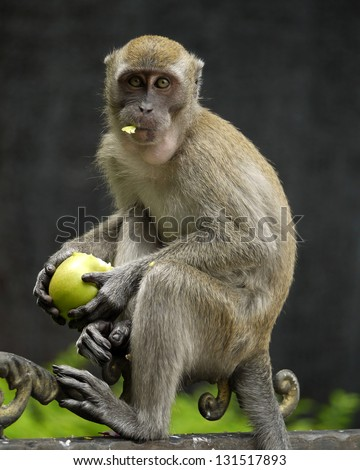 a monkey eating a green apple