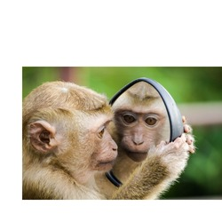A monkey watching its face by using a mirror... watch monkeys style