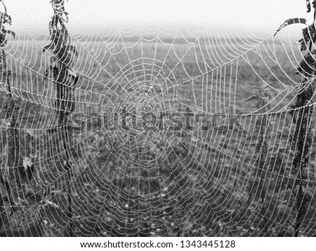 A monochrome picture of a spider web that is suspended between some stinging nettles and covered with thousands of dewdrops