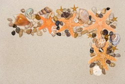 A montage frame of sealife on sand including starfish, cowries, welks and bubble shells for use as an abstract frame for almost any aquatic use.
