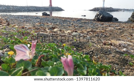 a morning beach with morning glory #1397811620