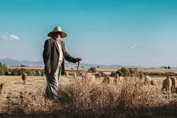 A Moroccan farmer with the official dress of this region. Standing on a crutch and looking at the camera ,watching sheep in the harvest season In the background, clear skies and mountains.