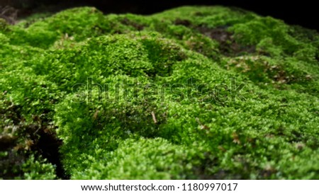 A moss that almost seems to glow #1180997017