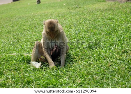 A mother and baby monkey sitting on the grass #611290094