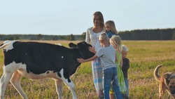 A mother and her 4 children touch a cow.