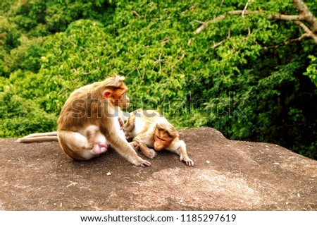 A mother primate tending its child taken in the jugles of Athirapally located in the Indian state of Kerala - Shutterstock ID 1185297619