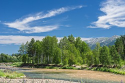 A mountain landscape on a sunny summer day with a river splashing and flowing over rocks, evergreens and trees on the banks and a ridge in the background, Altai Mountains, Kazakhstan