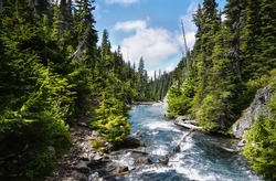 A mountain river flows in a coniferous forest. Rocky path along the river. Trail leads to Garibaldi Lake in Canada on a bright sunny day