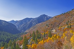 a mountain road in the rocky mountains, surrounded by colorful tress in the autumn fall season, with bright yellow leaves.