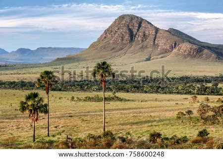 Shutterstock A mountain surrounded by trees typical of the Brazilian savannah. Moriche palm. Cerrado.