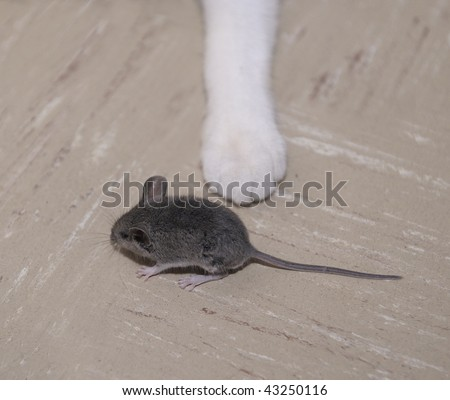 A mouse running away from a cat