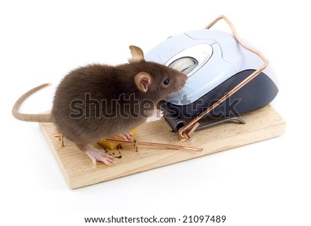 a mouse used his computer sibling to get to the cheese