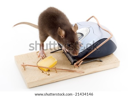a mouse used his computer sibling to get to the cheese - stock photo
