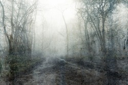 A muddy, path through a spooky, eerie forest. On a mysterious foggy, winters day. With a textured, vintage, grunge, edit.