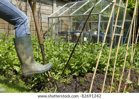 A muddy welly digging a fork on a private allotment vegetable garden.