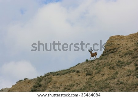 A mule deer in the badlands of Saskatchewan, Canada. - stock photo
