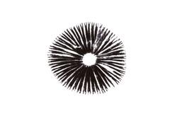A mushroom leaves a black spore print on a white background.