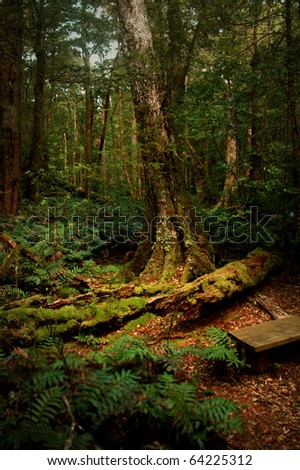 stock photo : A mysterious forest in Tasmania