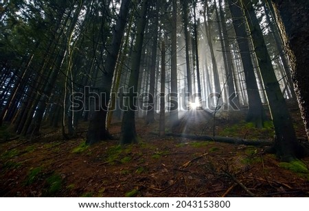 A mysterious glow in a dark forest. Glowing lights in dark forest. Forest shining lights. In the dark forest with mystery lights