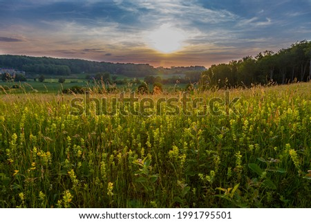 A n awesome sunset over the rolling hills in the south of Limburg near Maastricht. The last sunbeams give a golden colour over the hills and the field with wild yellow orchids. Foto stock ©