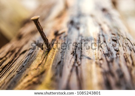 A nail in the bark of a tree