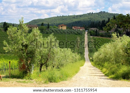 A narrow gravel road through a tuscan vineyard leading to a small village with olive trees on both sides