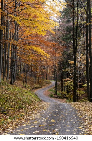 A narrow winding road trough the autumn or fall forest.