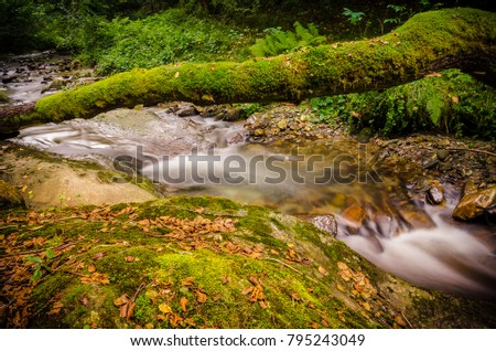 Shutterstock A natural bridge full of moss formed by the trunk of a tree fallen over a creek